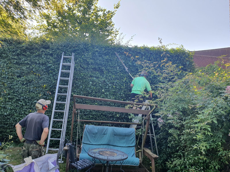 Hedge Trimming Northwood