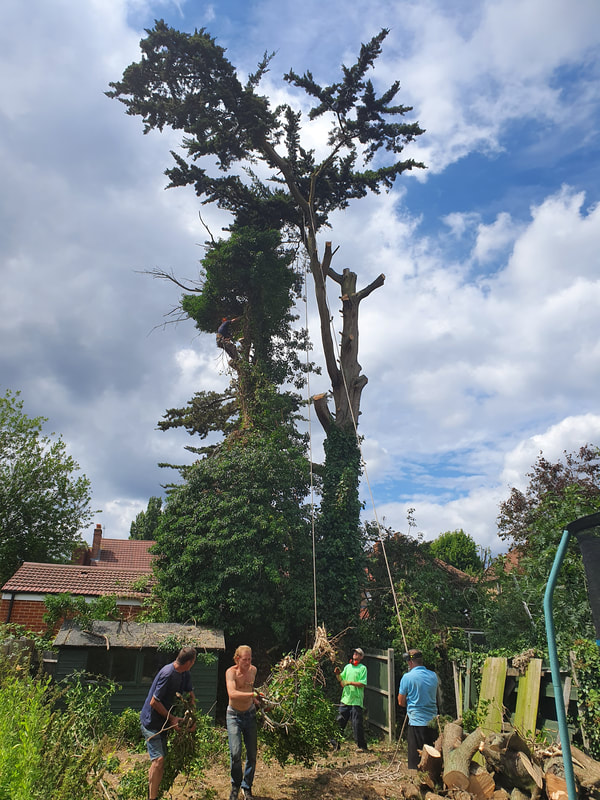 Tree Care Greenford