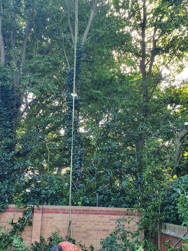 Tree Care Hillingdon