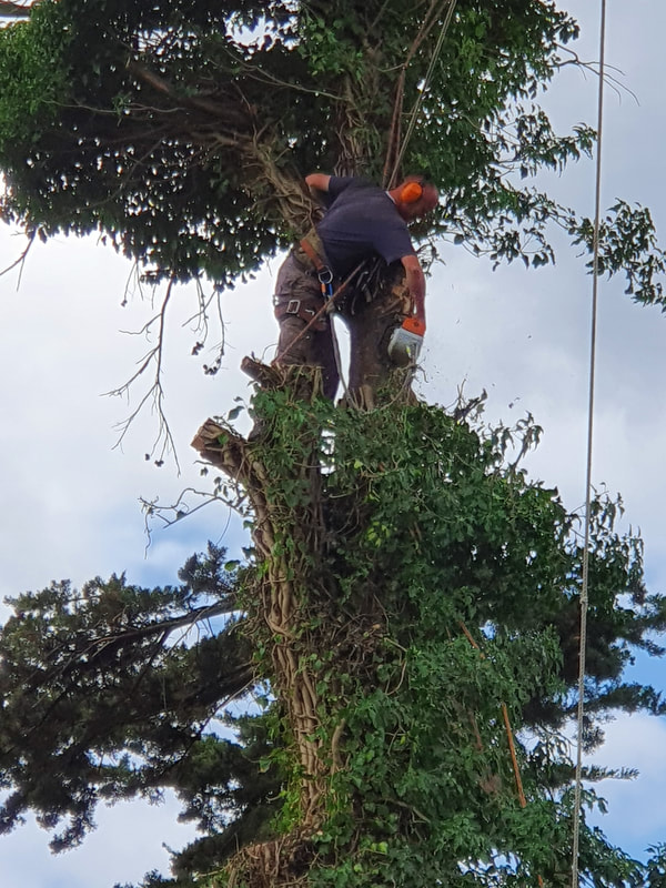 Tree Care in Greenford