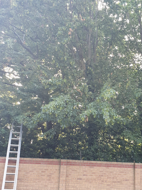 Tree Care in Hillingdon