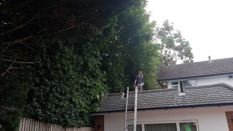 Tree Pruning in Harrow