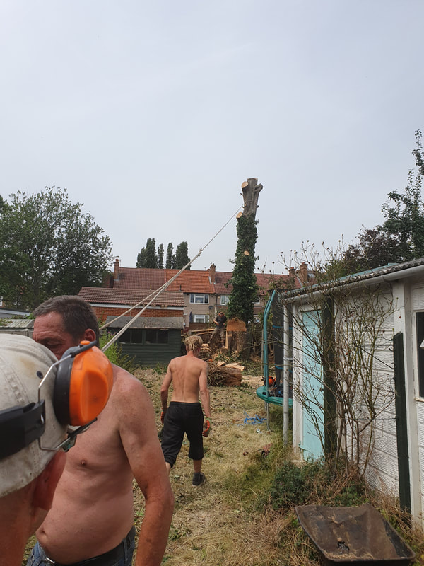 Tree Reducing in Greenford