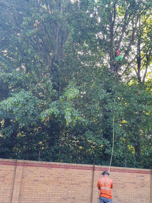 Tree Reducing in Hillingdon