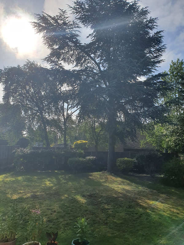 tree pruning Ickenham